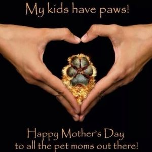 🐾❤️Happy Mother's Day to All FurBaby Mommas❤️🐾